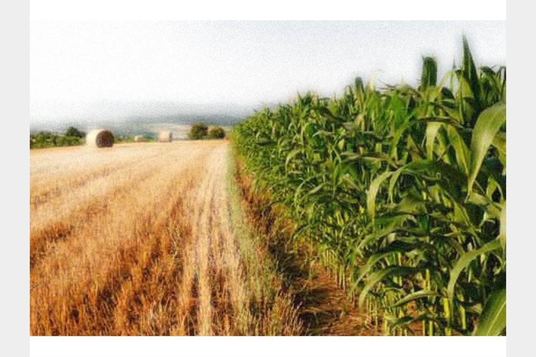 Terreno Agricolo in Vendita Vimercate