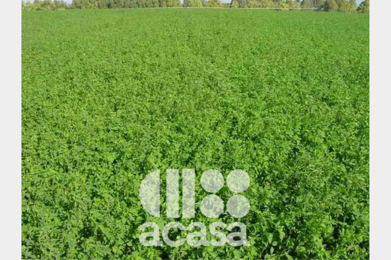 Terreno Agricolo in Vendita Cesena