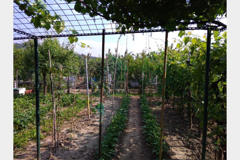 Terreno Agricolo in Vendita Rastignano
