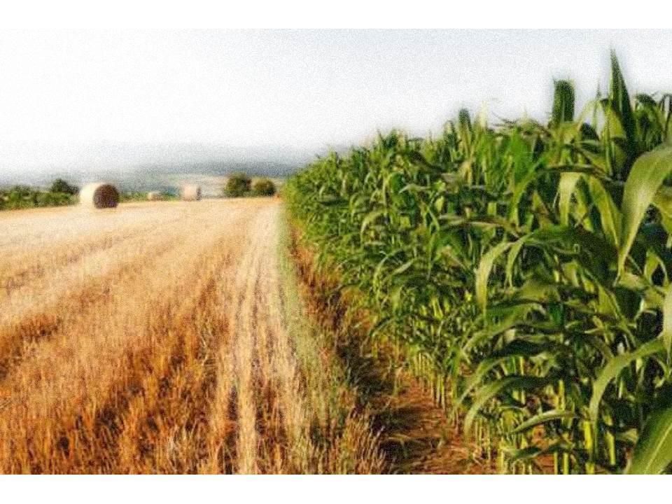 Vimercate In vendita terreno agricolo