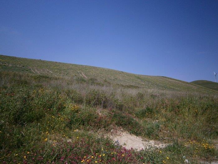 Catanzaro, Loc. Germaneto, Viale Europa, terreno agricolo di ca un ettaro