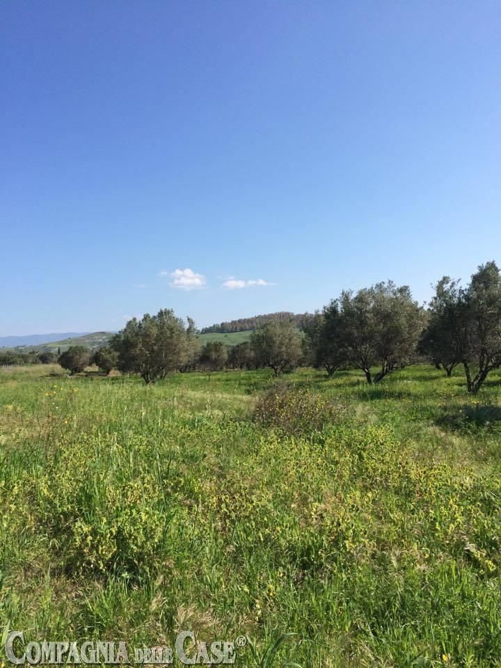 Catanzaro, località Barone, terreno industriale mq. 43830